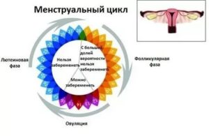 Вероятность беременности на 19 день цикла