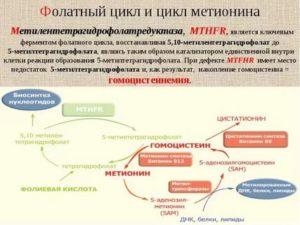 Мутация гена метилентетрагидрофолатредуктазы