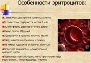 Повышены эритроциты