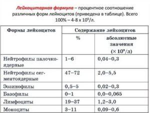Лейкоцитарная формула при беременности