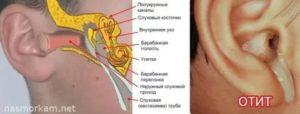 Звук в ухе при глотании и открывании рта