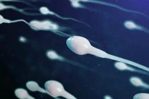 Сперматозоиды и мыло
