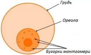 Бугорок при беременности