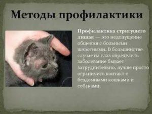 Профилактика лишая после контакта с больным животным