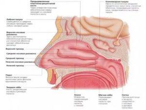 Востановление слизистой головки после акридерма