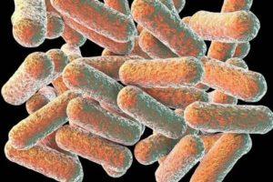 Что могло вызвать появление кишечной палочки morganella morganii?