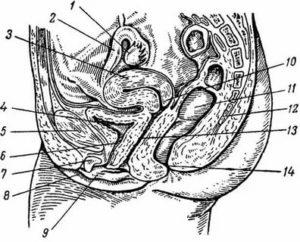 Беременность от ласок половыми органами