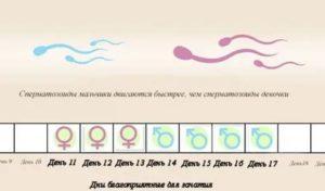 Вероятность беременности за 4 дня до месячных