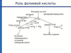 Влияет ли прием фолиевой кислоты на цикл