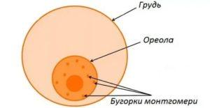 Воспаление на ореоле груди