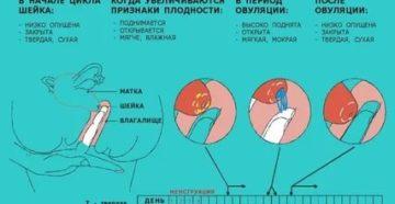 Является ли нормой сомкнутость цервикального канала во время месячных?